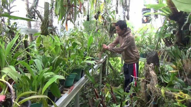 Menarik, Taman Wisata Anggrek di Mamasa