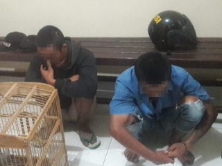 Kepergok Curi Burung Perkutut, 2 Pemuda di Polman Diamankan Polisi