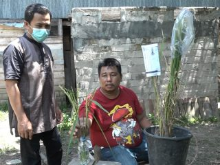 Sukses Kembangkan Bibit Padi Varietas Baru di Tengah Pandemi COVID-19