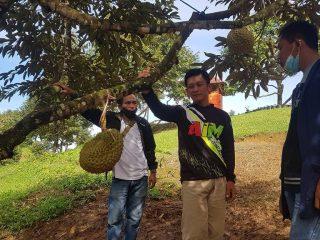 Pesona Kappung Ihing di Polman, Surga Pencinta Durian