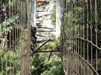 Cerita Warga, 2 Gadis Jatuh Saat Lintasi Jembatan Rusak di Mamasa