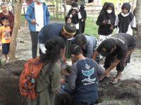 Diduga Masalah Pencernaan, Bayi Dugong di Polman Mati Setelah Sepekan Dirawat